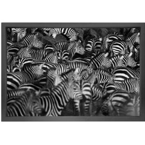 Canvas picture 5cm black frame zebra 90×150