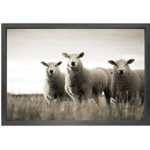 Canvas picture 5cm black frame Sheep 90 cm x 150cm