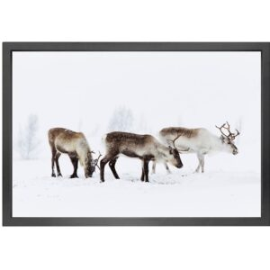 Canvas picture 5cm black frame reindeer 90 cm x 150cm
