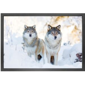 Canvas picture 5cm black frame Wolves 90 cm x 150cm
