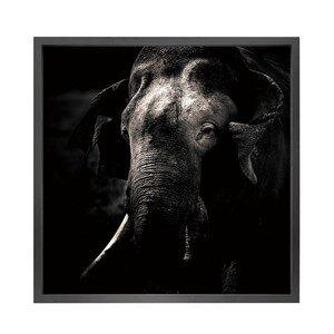 Canvas picture 5cm black frame Elephant 120 cm x 120cm