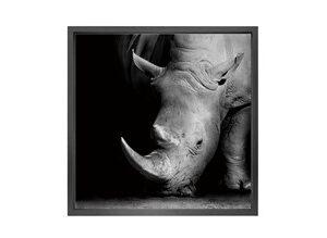 Canvas picture 5cm black frame Rhinos 120 cm x 120cm